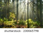 aurumn morning in the forest | Shutterstock . vector #230065798