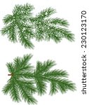Vector Isolated Pine Branch...