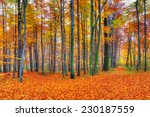 Beautiful Autumn Forest...