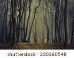 spooky twisted trees in dark... | Shutterstock . vector #230360548