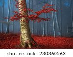Beautiful Tree With Red Leaves...