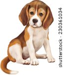 Stock vector beagle puppy sitting over white background 230361034
