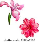 Vector Violet Iris Flower...