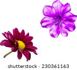 vector pink flower  spring... | Shutterstock .eps vector #230361163