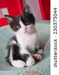Stock photo black and white kitten sittingin a bowl on a table 230375044