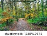A Path Leading Through Autumn...