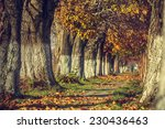 serene autumn landscape with... | Shutterstock . vector #230436463