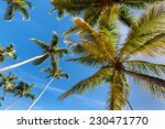 Palm Tree And Palm Leaves From...