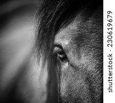 Close Up Of A Horse Head