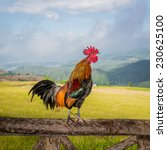 Rooster Crowing On The Wooden...