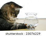 Stock photo cat watching fish swimming in fishbowl on a table isolated on white 23076229