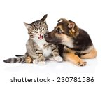 Stock photo puppy sniffs cat isolated on white background 230781586