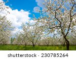 apple tree blossom with white... | Shutterstock . vector #230785264