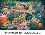 Colorful Autumn Pumpkin Display