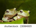 Two Australian Tree Frogs ...