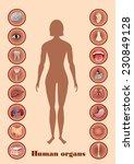 illustration of diagram of... | Shutterstock . vector #230849128