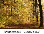 Path Through Autumn Forest...