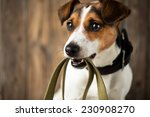 Stock photo cute dog waiting for a walk 230908270