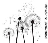 black vector dandelions | Shutterstock .eps vector #230926900