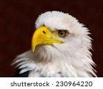 bald eagle head. stylized as... | Shutterstock . vector #230964220