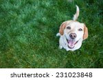 Stock photo dog playing outside smiles 231023848