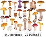 Set Of Edible Mushrooms...