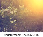 beautiful butterfly and flower | Shutterstock . vector #231068848