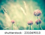 violet wild flowers and golden... | Shutterstock . vector #231069013