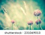 violet wild flowers and golden... | Shutterstock . vector #231069013