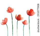 Set Of Watercolor Poppy Flowers
