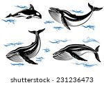 cartoon vector sea whales with... | Shutterstock .eps vector #231236473