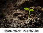 green sprout growing from seed. ... | Shutterstock . vector #231287008