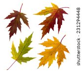isolated autumn leaves set | Shutterstock . vector #231294448