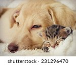 Stock photo puppy and kitten are sleeping 231296470