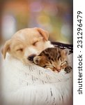 Stock photo puppy and kitten are sleeping 231296479