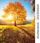 majestic alone beech tree on a... | Shutterstock . vector #231333664