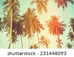 palm trees at tropical coast ...   Shutterstock . vector #231448093