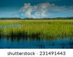marsh  dataw island sc | Shutterstock . vector #231491443