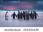 King Penguins In The Falkland...