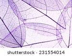 decorative skeleton leaves... | Shutterstock . vector #231554014
