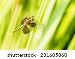 dragonfly on green grass   Shutterstock . vector #231605860