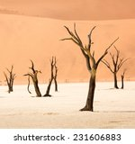 Dead Camelthorn Trees  Deadvle...