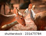 two deer caring care   Shutterstock . vector #231675784