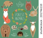 Forest Animals. Wild Animals....