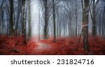 fairytale autumn forest in fog... | Shutterstock . vector #231824716