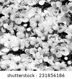 floral background with stylized ... | Shutterstock . vector #231856186