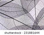 decorative skeleton leaves...   Shutterstock . vector #231881644