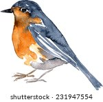 Watercolor Drawing Bird  Robin...