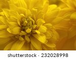 beautiful yellow flower | Shutterstock . vector #232028998