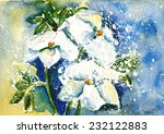 winter bloom christrose | Shutterstock . vector #232122883